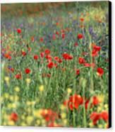 Tuscan Wildflowers Canvas Print