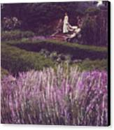 Twilight Among The Lavender Canvas Print