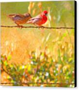 Two Birds On A Wire Canvas Print by Wingsdomain Art and Photography
