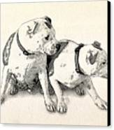 Two Bull Terriers Canvas Print by Michael Tompsett