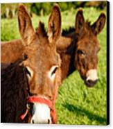 Two Donkeys Canvas Print