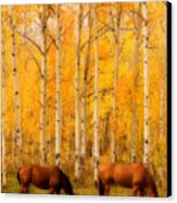 Two Horses In The Autumn Colors Canvas Print by James BO  Insogna