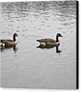 Two Lovely Canadian Geese Canvas Print by Douglas Barnett
