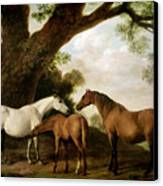 Two Mares And A Foal Canvas Print