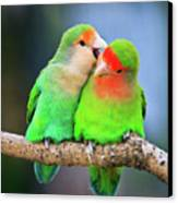 Two Peace-faced Lovebird Canvas Print