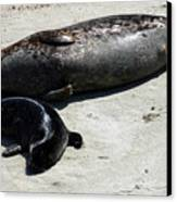 Two Seals Canvas Print
