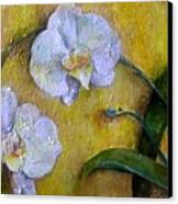 Two White Orchids Canvas Print