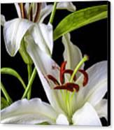 Two Wonderful Lilies  Canvas Print