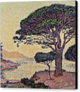 Umbrella Pines At Caroubiers Canvas Print by Paul Signac