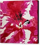 Uno Canvas Print by Dana Patterson