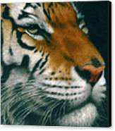 Untitled Tiger Canvas Print