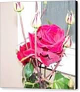 Velvet Red Rose Of Sharon Canvas Print