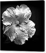 Vibrant Flower Series 3 Canvas Print by Jen White