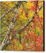 View From My Window Canvas Print by Lori Frisch