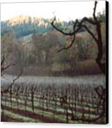 Vineyard In The Winter Canvas Print