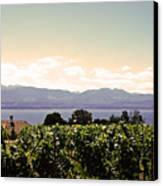 Vineyard On Lake Geneva Canvas Print
