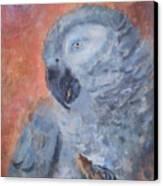 Vinny  Canvas Print