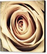 Vintage Rose Canvas Print by Wim Lanclus