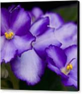 Violet Dreams Canvas Print