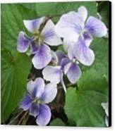 Violets 2 Canvas Print by Anna Villarreal Garbis