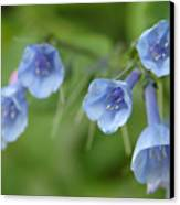 Virginia Bluebells I Canvas Print
