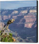 visit to Grand Canyon  Canvas Print by Atul Daimari