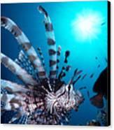 Volitan Lionfish Canvas Print by Steve Rosenberg - Printscapes