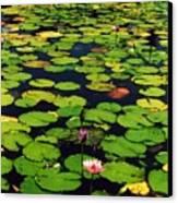 Wailea Water Lilies Canvas Print