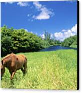 Wainiha Valley Canvas Print by Peter French - Printscapes