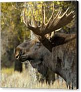 Waiting For The Challengers Canvas Print by Sandra Bronstein