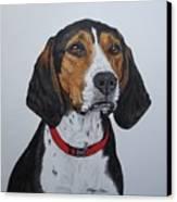 Walker Coonhound - Cooper Canvas Print