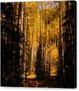 Walking With Aspens Canvas Print