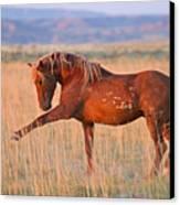 War Horse Canvas Print by Sandy Sisti