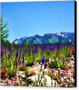 Wasatch Mountains In Spring Canvas Print by Tracie Kaska