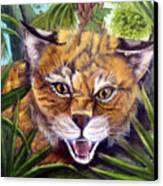 Watching  Florida Bobcat Canvas Print