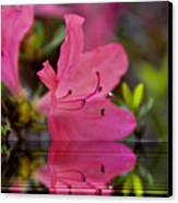 Water Azalea Canvas Print