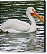 Water Bird With Notches Canvas Print by Douglas Barnett