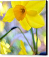 Water Color Daffodil Canvas Print