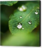 Water Droplets Canvas Print by Adnan Bhatti