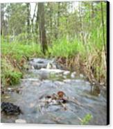 Water Flows After A May Rain Canvas Print