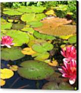 Water Lilies At San Juan Capistrano Canvas Print