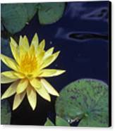 Water Lilly - 1 Canvas Print