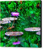 Water Lilly Canvas Print by William Wetmore