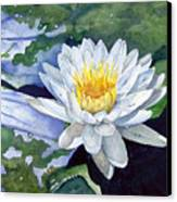 Water Lily Canvas Print by Sam Sidders