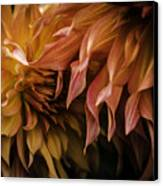 Weeping Petals Canvas Print by Rod Sterling
