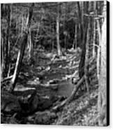 Wesser Creek Trail Canvas Print