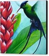 Western Streamertail Hummingbird Canvas Print