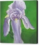 Wet Iris Canvas Print