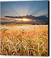 Wheat At Sunset Canvas Print by Meirion Matthias
