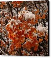 When Fall Meets Winter Canvas Print
